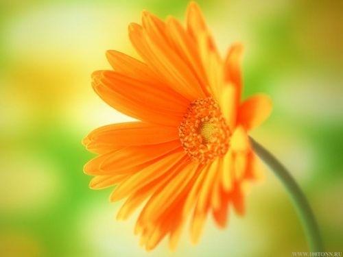 Комнатные растения и астрология