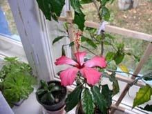 Упрощаем и улучшаем цветочную жизнь