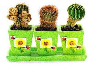 Чтобы растения пустыни порадовали цветением