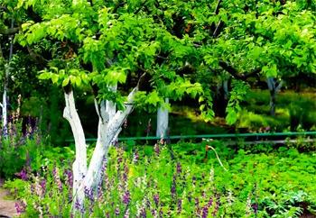 Правила посадки многолетних растений