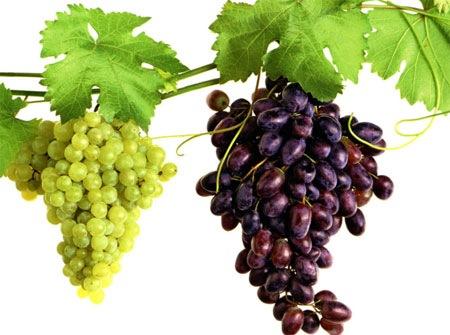 Выбор сортов винограда
